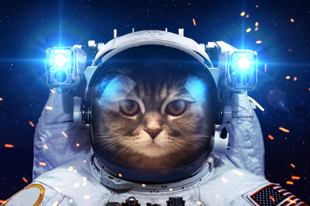 satellite view: Beautiful cat in outer space.  Stock Photo