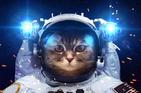 astronauta: Gato hermoso en el espacio exterior. Foto de archivo
