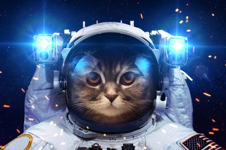 cat: Beautiful cat in outer space. Stock Photo