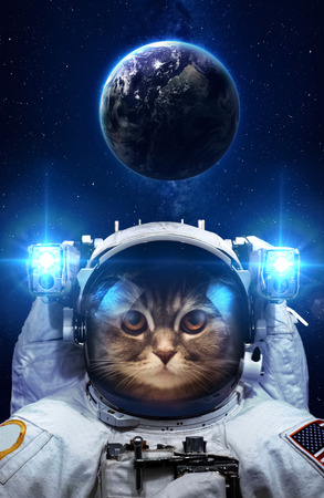 kepler: Beautiful cat in outer space. Stock Photo