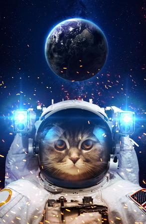 koty: Piękny kot w przestrzeni kosmicznej.