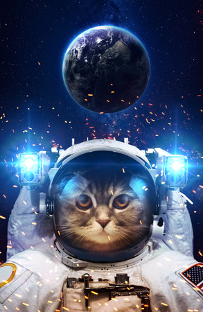 sonne mond und sterne: Schöne Katze im Weltraum. Lizenzfreie Bilder