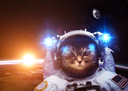 An astronaut cat floats above Earth. Stars provide the background. Reklamní fotografie - 46699531