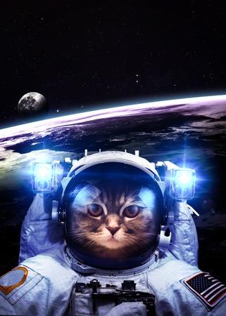 astronaut: Un gato astronauta flota por encima de la Tierra. Estrellas proporcionan el fondo. Foto de archivo