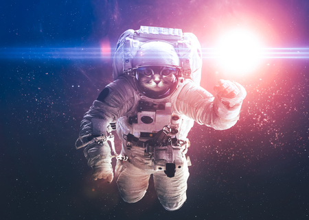 science fiction: Beautiful cat in outer space.