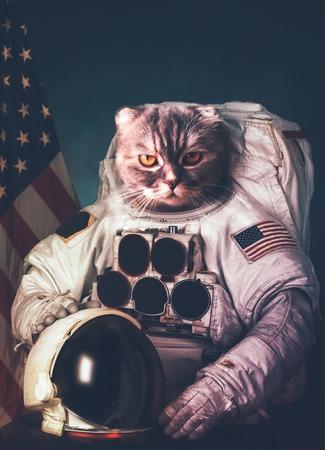 아름 다운 고양이 우주 비행사. 스톡 콘텐츠