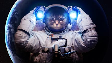 Beautiful cat in outer space. Zdjęcie Seryjne