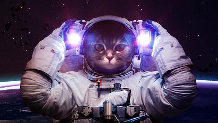 sol y luna: Gato hermoso en el espacio exterior. Foto de archivo