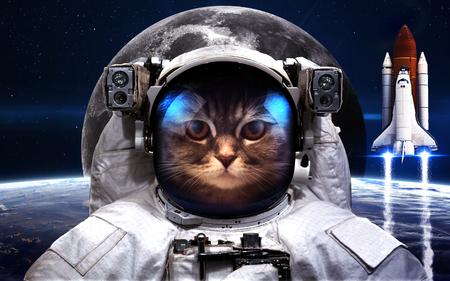 schöpfung: Cat Astronaut im Weltraum. Weltraumspaziergang. Lizenzfreie Bilder