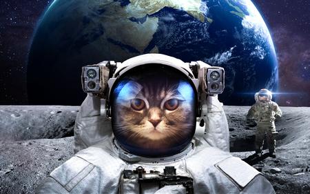 astronauta valiente gato en la caminata espacial. Foto de archivo