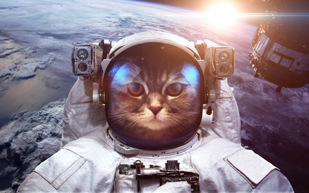 Astronaut cat in outer space against the backdrop of the planet earth 写真素材