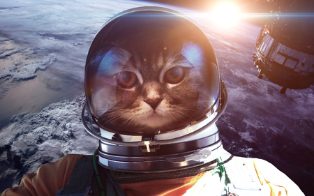 planet earth: Astronaut cat in outer space against the backdrop of the planet earth Stock Photo