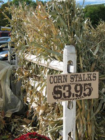 Corn Stiele f�r den Verkauf im Herbst
