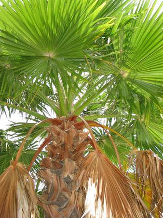 Ein Blick auf eine Palme auf einem bew�lkten Tag