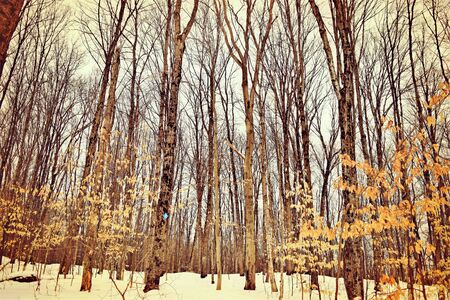 Forestry with bare trees