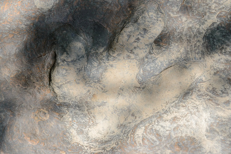 paleontologist: Dinosaur footprints The imprint on the rock era, In the early Cretaceous,A large carnivorous species about 140 million years,in Kalasin,Thailand Stock Photo