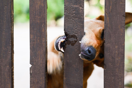 young dog chewing a wooden fence house