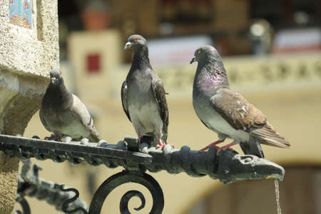 Three doves sitting in a row on tap with flowing water photo
