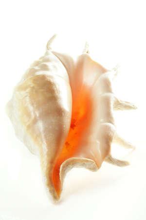 upturned: Upturned shell photo over light background Stock Photo