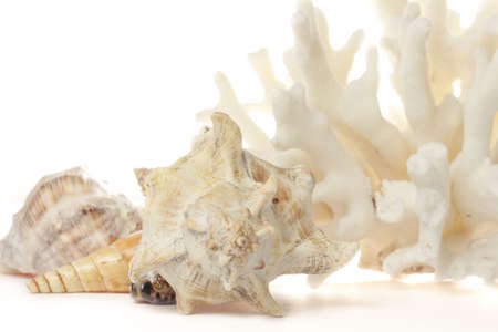 Set of sea shells and coral over light background