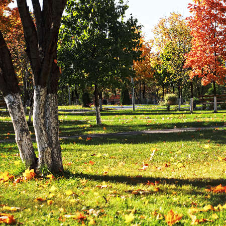Ordinary city park in autum with colorful trees and yellow leaves