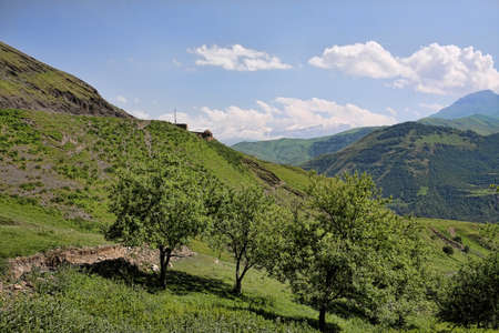 Fruit trees in Caucasus mountains landscape with Bazar-Dyuzyu peak view on backstage Stock Photo - 7500586