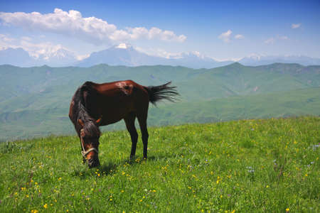 Horse on green mountain pasture in sunny summer day