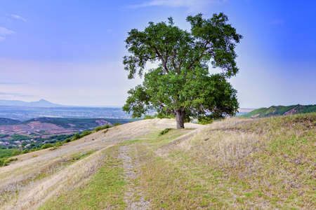 Tree on hill near Ispik village in Caucasus mountains Stock Photo - 15560694