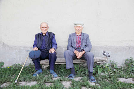 wise man: Two old friends sitting on bench at wall outdoors with chicken aside