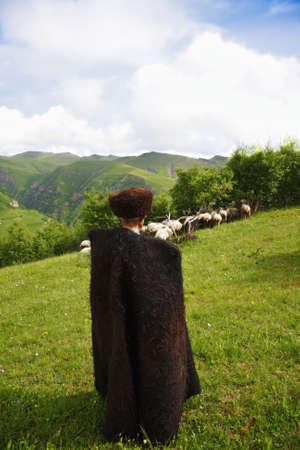 herdsman: Shepherd herding a flock of sheep in a summer mountains Stock Photo