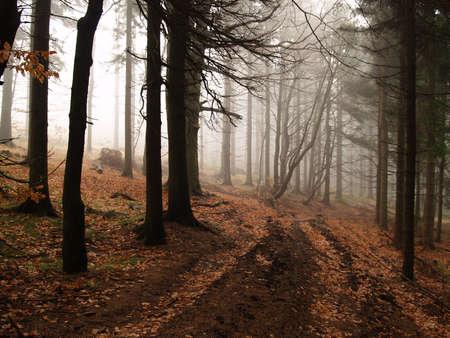 Foggy autumn forest photo