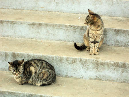 two cats on stairs Stock Photo