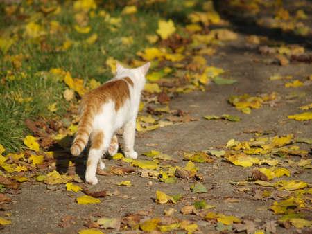 Cat is going away