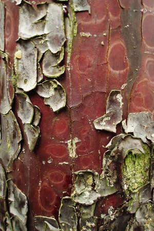 Bark colorful texture Stock Photo