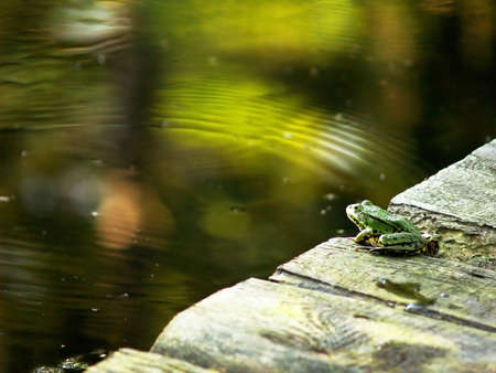 Green frog looking at colourful wavy watertable