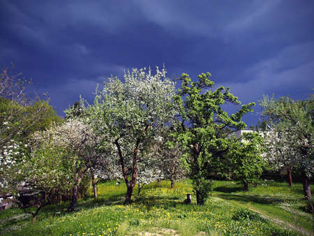View on a spring garden in bloom before storm, dramatic sky photo