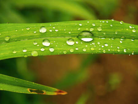 Leaf with drops of water, natural motive Stock Photo