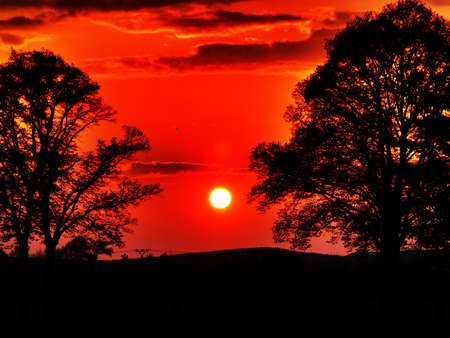 dramatic red sunset, tree silhouettes Stock Photo