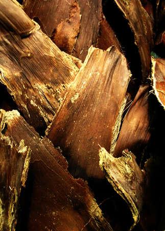 palm tree trunk bark texture Stock Photo - 17103048