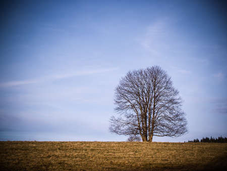 solitaire tree on horizon