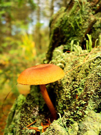 little mushroom and mosses