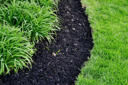 Perfectly cut edge of lawn next to fresh mulch and compost mixture filled in new spring flowerbed with hemerocallis perennial flowers garden detail, spring garden maintenance work