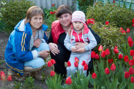 three generations of women: Three generations of of beautiful women portrait sitting together in a tulip field.  A happy grandmother with her daughter and granddaughter spending time together. Stock Photo