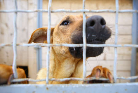 Abandoned dog in the kennel,homeless dog behind bars in an animal shelter.Sad looking dog behind the fence looking out through the wire of his cage Stock Photo