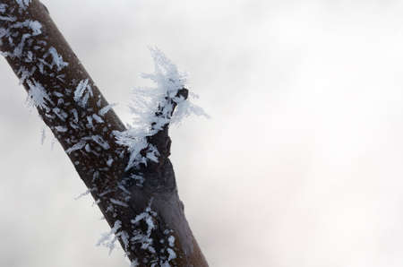 Frost on branches. Twig covered with hoarfrost,close up.Beautiful winter seasonal natural background.Winter landscape Reklamní fotografie
