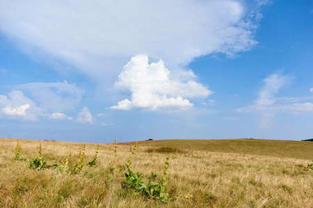 Grass field and wild flowers on small hills in Vosges mountain,blue sky with clouds.Rural landscape