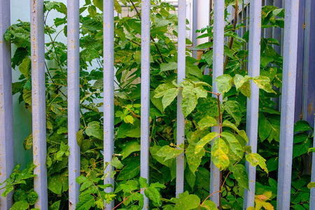 closed community: Green trees behind the metal fence Stock Photo