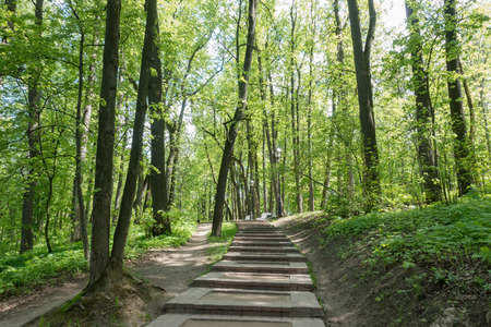 Road in the spring park. Tsaritsyno Park