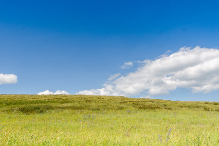mixed wallpaper: Yellow-green hill and sky with clouds. Wild grasses. Mixed grass. Summer sunny day. Beautiful summer landscape.