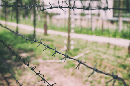 rebellion: Barbed wire on the background of greenery. Restricted boundary